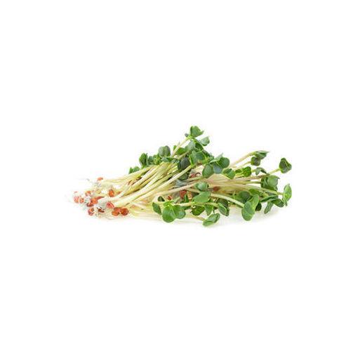 Picture of נבטי צנונית
