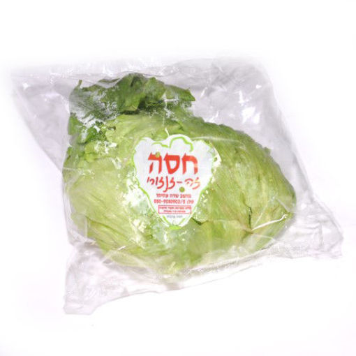 Picture of חסה עגולה- ארוזה